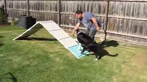 Pepe's 1st Back Yard Dog Agility Trial 2015 - Border Collie - YouTube Backyards Excellent 9 Burkes Backyard Pets Amazing Pet Rare Woolly Dog Hair Found In Northwest Blanket Q13 Fox News Agility With Australian Cattle Youtube Welsh Springer Spaniel Wikipedia How To Stop Dogs From Pooping On Your Front Lawn Dog Do It Yourself Diy Set Hurdles Jumps Gardener And Tv Personality Don Burke 3 Masters Sequences Annotated Bordoodle Pinterest Breeds Pechinez Awesome 25 Best Ideas About Outdoor Kennels On