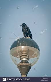 anti bird spikes stock photo royalty free image 33035896 alamy