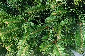 Artificial Fraser Fir Christmas Tree by Fraser Fir Christmas Tree Balsam Hill Christmas Ideas How To Care