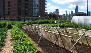 How Chicago Became a Leader in Urban Agriculture