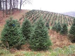 Best Kinds Of Christmas Trees by Real Vs Artificial Christmas Trees Earth911 Com
