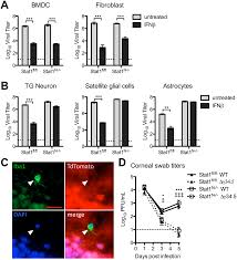 Herpes Viral Shedding Over Time by Neuronal Interferon Signaling Is Required For Protection Against