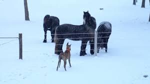 Dog Horse Shedding Blade by Shedding Horse Youtube