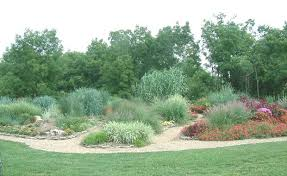 Ornamental grasses add drama height color and texture