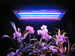 fluorescent lights wondrous purple fluorescent light 132 purple