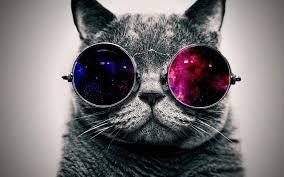 cisapride for cats megacolon in cats holy constipation batman part ii