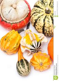 Types Of Pumpkins And Squash by Different Kinds Of Pumpkins Royalty Free Stock Image Image 26672796