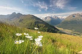 100 Muottas Muragl Green Meadows And Flowers Frame The High Peaks