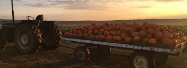 Pumpkin Patch Greenbrier Arkansas by Peebles Farm Pumpkin Patch And Corn Maze