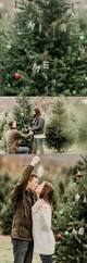 Fraser Christmas Tree Cutting by Best 25 Christmas Tree Farms Ideas On Pinterest Christmas Tree