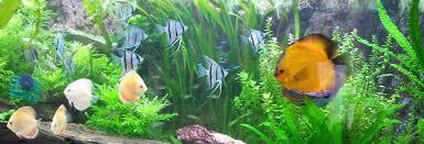 ph aquarium eau douce comment baisser le ph de l eau d un aquarium