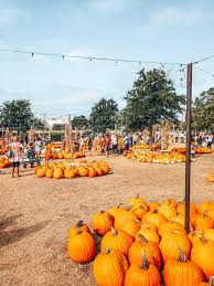 Grapevine Texas Pumpkin Patch by Hall U0027s Pumpkin Farm A Great Fall Activity Right By Dallas Tx