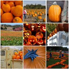 Pumpkin Patch Greenbrier Arkansas by Kate Smith U2013 Sensational Color