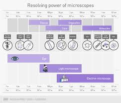 Epifluorescence Microscope Basics