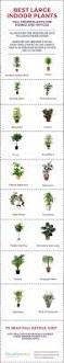 Best Plant For Bathroom by Best 25 Best Plants For Office Ideas On Pinterest Plants For