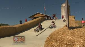 Frederick Maryland Pumpkin Patch by Frederick U0027s Summer Farms Offering Fall Fun Youtube