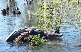 alligator bayou lake update louisiana map explore lousiana s great outdoors sponsored