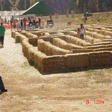 Pumpkin Patches Near Chico California by Find Pick Your Own Pumpkin Patches In California Corn Mazes And