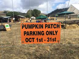 Nicasio Pumpkin Patch Marin by Nice France Nice France Marché Des Fleurs The San Franciscan