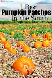 Griffin Farms Pumpkin Patch by Don U0027t Miss The South U0027s Best Pumpkin Patches U0026 Corn Mazes