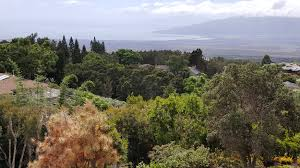 Kula Pumpkin Patch Maui by Discover Kula A Quick Guide To Popular Points Of Interest