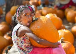 Pumpkin Patch Irvine Jeffrey by Photos How Was October Santa Ana And Newport Beach Broke