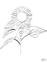Free Images Sunflower Tournesol Pinterest Sonnenblumen