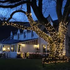 How To Hang Christmas Lights On A Tree Outside Christmaswalls Co