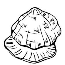 Unique Beaded Periwinkle Seashell Coloring Page