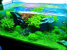aquarium d eau douce entretiens d aquariums d eau douce entretien d aquarium