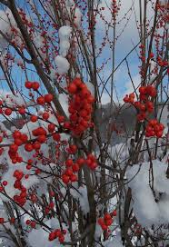Winterberry Christmas Tree Farm Pa by 2016 Highlights Friends Of Salt Springs Park