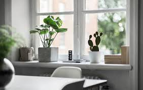 große zimmerpflanzen die 12 schönsten fürs zuhause