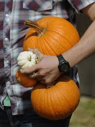 Roca Pumpkin Patch Lincoln by Your Guide To Area Pumpkin Patches Family Journalstar Com