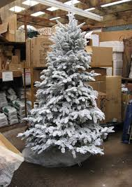 Fraser Fir Christmas Trees Uk by Flocked Christmas Tree Care Best Images Collections Hd For