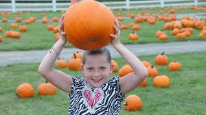 Pumpkin Picking Farm Long Island Ny by Long Island Pumpkin Picking Take Advantage Of The Best Pumpkin