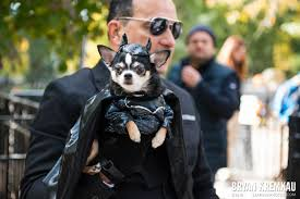 Tompkins Square Halloween Dog Parade by Tompkins Square Halloween Dog Parade 2015 Tompkins Square Park