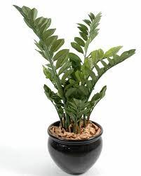 entretien plante grasse d interieur plantes grasses interieur photos de conception de maison