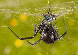 Do Tarantulas Shed Their Fangs by Spiderbytes This Is A Blog About Spiders Page 4