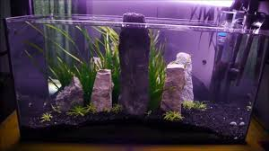 54 Liter Aquascape Setup Time Lapse - YouTube How To Set Up An African Cichlid Tank Step By Guide Youtube Aquascaping The Art Of The Planted Aquarium 2013 Nano Pt1 Best 25 Ideas On Pinterest Httpwwwrebellcomimagesaquascaping 430 Best Freshwater Aqua Scape Images Aquascape Equipment Setup Ideas Cool Up 17 About Fish Process 4ft Cave Ridgeline Aquascape A Planted Tank Hidden Forest New Directly After Setting When Dreams Come True