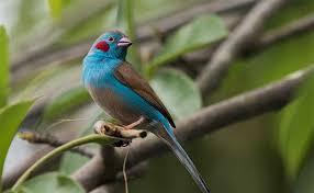 Gambia Senegal Bird Watching Wildlife Holidays West African Birdwatch