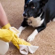 Dog Urine Wood Floors Vinegar by Hardwood Floors Getting Rid Of Pet Urine Odor Angie U0027s List