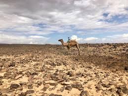 100 Desert Nomad House Sahara TrekThe Good Bad And The Ugly The Voluntourist