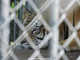 Yes, There Really IS A Tiger At A Truck Stop | Free Tony The Tiger