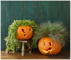Porcupine Eats Pumpkin by Holidays Archives A Sparkle Of Genius