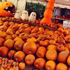Pumpkin Patch Naples Fl by Need A Pumpkin Fall In Celebration Florida The Town Of