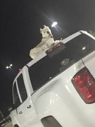 This Dog On Top Of A Truck In A Walmart Parking Lot : Mildlyinteresting Illustration Of A Side And Top View Pickup Truck Royalty Free How To Remove A Trucks Hard Shell Top Or Camper Cheap And Easy Newquay Cornwall Uk April 7 2017 Female Rnli Lifeguard Keeping 8 Custom Accsories You Need Tsa Car Fileman On Of Truck Stacked With Bags Wool Am 869111 Want The Best Resale Value Buy Pro Psbattle This Dog Ptoshopbattles Convert Your Into Camper 6 Steps Pictures 10 Benefits Owning Rv Lifestyle News Tips Overpass Fell Wtf