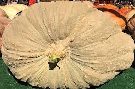 Worlds Heaviest Pumpkin Pie by The Official Circleville Pumpkin Show Website