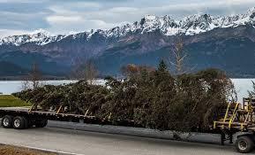 Seattle Christmas Tree Disposal 2015 by Your Christmas Tree U0027s Carbon Footprint Sightline Institute