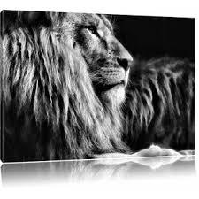 leinwandbilder löwe zum verlieben wayfair de