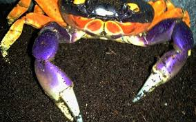 Spirit Halloween Sacramento Natomas by Halloween Themed Crabs At Sacramento Zoo Also Suited For Giants